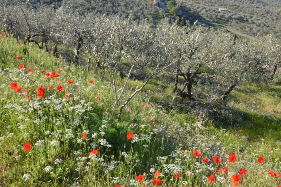 """Dopo il riconoscimento Giahs, il """"Progetto Olio"""" e poi l'obiettivo Unesco"""