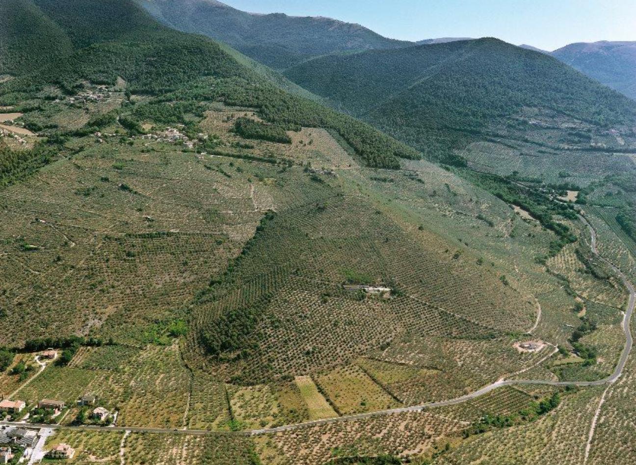 Gli ulivi dell'Umbria vogliono il riconoscimento Unesco